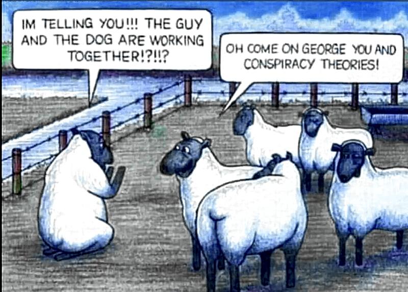 Conspiracy Sheep